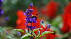 ハーブ庭園にいた蜂