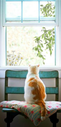 Kitty watches the birds More