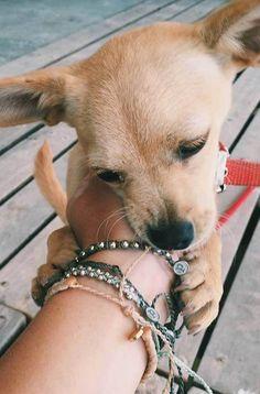 Puppy Love | Pura Vida Bracelets