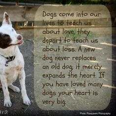 this is so true. some of the most friendliest people I know have a great respect and Passion for dogs.Best kinda people if you ask me-Abby