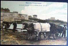 FRANCE ~ 1900's BIARRITZ ~ ATTELAGES BASQUES ~ GRANDE PLAGE ~ OXEN PULLED CARTS