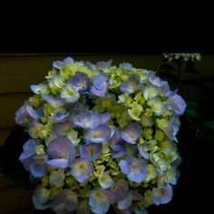 Would love to grow hydrangea sometime....