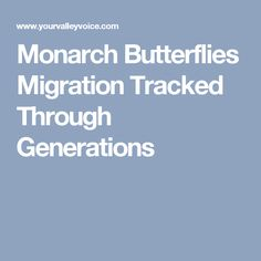 Monarch Butterflies Migration Tracked Through Generations