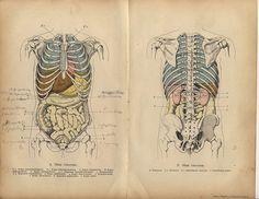 taken from 'Handbuch der Homöopathischen Praxis' 1894 purchased at brimfleld