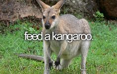 Sydney, Australia - this was fun... kangaroos like you to scratch behind their ears just like other animals!