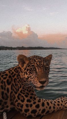 Animal Wallpaper, Disney Wallpaper, Cute Animal Photos, Cute Pictures, Big Cats, Cute Cats, Photo Polaroid, Pretty Wallpapers, Cute Baby Animals