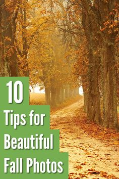10 Tips for Beautiful Fall Photos Landscape Photography Tips, Photography Tips For Beginners, Photography Lessons, Autumn Photography, Photography Camera, Sunset Photography, Outdoor Photography, Photography Business, Photography Tutorials