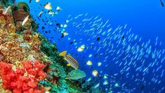 The Beauty of the Golden Triangle of World Coral Reefs of Bunaken National Park Indonesia - TravelLearn Golden Triangle, Manado, Holiday Destinations, Underwater, National Parks, Wallpaper, Travel, Animals, Beauty