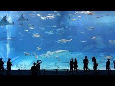 Georgia Aquarium. If you are ever in Atlanta, you have to go! It's amazing!!