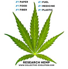 Hemp with its many uses became a serious threat to some of the big industries out there in plastics, oil and paper.