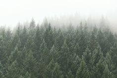 Die Natur wird dem Geiste immer Frieden schenken; sie entspannt Sie nach einem langen Tag in der Arbeit oder in der Schule. Die Fototapete eines frischen Kiefernwaldes zeigt mehrere atemberaubende Kiefern, die hinter einer Nebelwand verschwinden. Diese Waldtapete ist eine Top-Wahl, vor allem, wenn Sie Naturliebhaber sind oder nach einer Baumlandschaftstapete suchen.