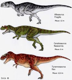 Neotheropod apex carnivores of different era : (allosauroids= )Allosaurus(early cretaceous) /Ceratosaurus(Late jura )/ (tyrannosaurid=) T-Rex(late cretaceous) * Note = The oldest is the ceratosaurus