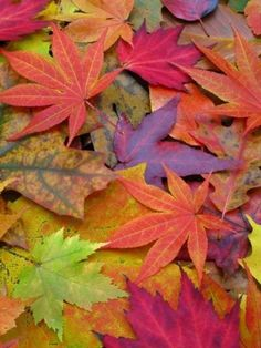 """""""Fall"""" in love with these colorful leaves!"""