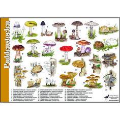 Herkenningskaart-Paddenstoelen-991011.jpg (567×567)