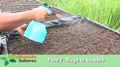 Cultivando Saberes #5 - Métodos de Siembra