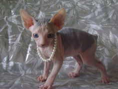 oh my goodness :) look at this little lady in her pearls