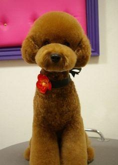 Japanese take on the teddy bear clip.