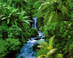 Rain forest in South America  Another of my bucket list destinations.  Plan this one for spring 2015