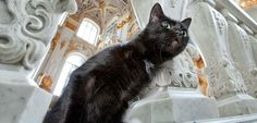 """copperbadge: """"chernobrka: """"hermitage museum's cat employees, saint-peretsburg, russia """" This lil dude is my favorite. House Of Romanov, Winter Palace, Hermitage Museum, Pretty Cats, Cute Dogs, Saints, Russia, Vacation Travel, Weird"""