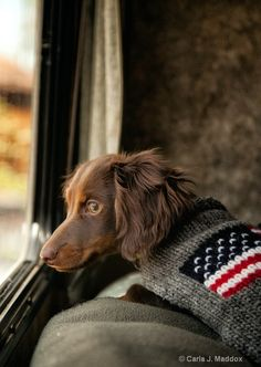 Being Patriot to The United States of America doesn't end with people, animals as well proudly wear Our Flag Dog Day Afternoon, Dachshund Love, Red And White Stripes, Mans Best Friend, Beautiful Creatures, Pet Birds, Fur Babies, Cute Dogs, Dog Cat