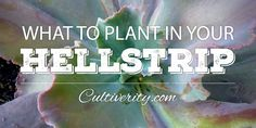 What to Plant in Your Hellstrip Vista Landscape, Puppy Supplies, Urban Dictionary, Dog Houses, Front Yard Landscaping, Growing Plants, Yard Art, Sidewalk, Surface