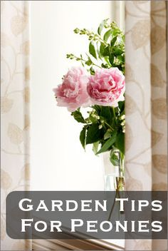 """GARDEN HELP; Peonies"" - from Tipnut.com. >> We wonder about that Bordeaux mix fungicide suggestion.  Are there leaching issues with fixed copper mixes?"
