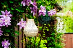 Want sophisticated outdoor lighting? Soji Stella by Allsop Home & Garden is it! Bohemian Lighting, Outdoor Lighting, Solar Lanterns, Delicate, Home And Garden, Bulb, Shapes, Landscape, Plants