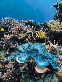 I want to go scuba diving in the Great Barrier Reef, in Queensland, Australia!