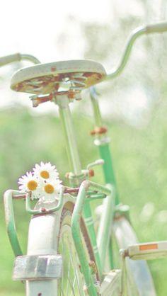 daisy bike (via TumbleOn) Image Zen, Deco Nature, Daisy Love, Daisy Daisy, Vintage Bicycles, Simple Pleasures, Wall Collage, Color Splash, Mint Green