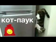 Кот-паук. Смешной кот между стеной и холодильником