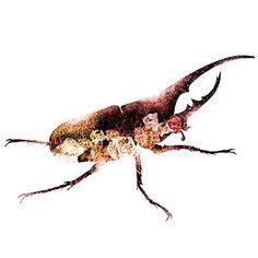 Nostalgic Art - Rhinoceros Beetle Nostalgic Art, Rhinoceros, Beetle, Art Art, Original Artwork, Fine Art Prints, Greeting Cards, Posters, Shirts