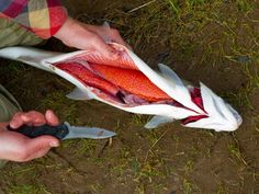 How to Clean a Fish (I use a box cutter on cat fish. The blades seem to dull fast and the razors are easy to change. I feel like I get more meat off of the fish.)