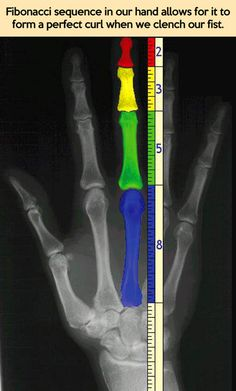 Fibonacci sequence in our hand…
