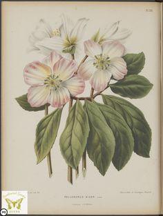 chrose.jpg (1544×2048)