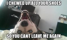 seriously, I have this dog ...