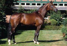 Florencio I (1999, 170cm, Florestan I x Walessa - Weltmeyer)