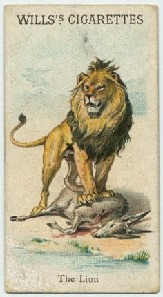 The Lion - Animals & Birds series for Will's Cigarettes from The New York Public Library Digital Collections. Vintage Humor, Vintage Ads, Big Cat Tattoo, Animal Flow, Lion Illustration, Vintage Book Covers, Extinct Animals, Animal Alphabet, Antique Paint