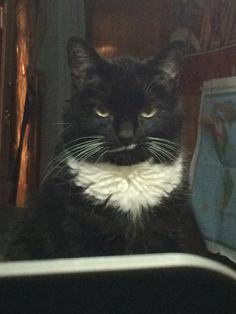 tuxedo bunnycat is judging me :(