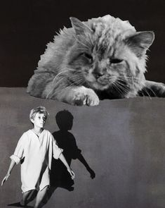 Edmond Simpson Catatonic Dream State (Rothko-Vintage) (01-18) Viera, Collage Art, Cats, Animals, Vintage, Paper Pieced Patterns, Gatos, Animales, Animaux