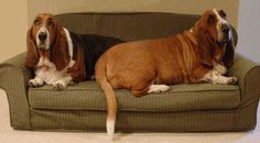 Dog Couch Bed ~ http://modtopiastudio.com/the-unique-raised-dog-bed-for-the-beloved-pet/
