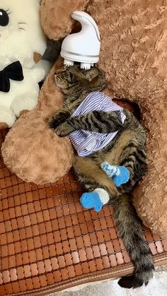 Funny Categories Fuunyy The cat is very comfortable to massage like this Source by buythatgo Cute Cat Gif, Cute Funny Animals, Cute Baby Animals, Animals And Pets, Son Chat, Cute Animal Videos, Kitten Gif, Cat Supplies, Fat Cats