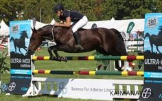 VICKY WILSON BAREBACK AND bridleless jumping at Horse of the Year Hawkes Bay New Zealand and bridleless