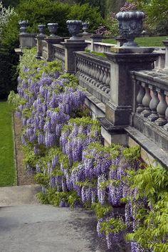 Long Island Blog - Long Island, New York: Old Westbury Gardens