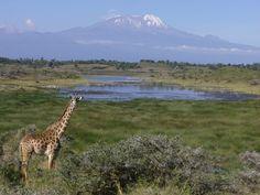 Pour la Journée de la Terre, les 10 merveilles de la nature menacées