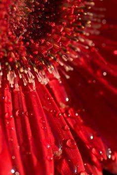 Red | Rosso | Rouge | Rojo | Rød | 赤 | Vermelho | Maroon | Ruby |