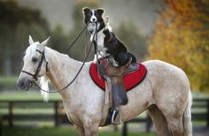 Hecan rides on the back of stunt horse Kiko. (David Caird / Newspix / Rex USA)