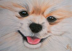 Pomeranian Paintings | ... - Pomeranian Drawing by Marita Lipke - Jem - Pomeranian Fine Art
