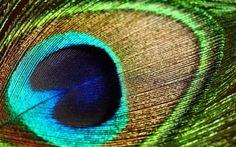 Wallpaper Desktop Background Bird (33)