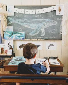 Ocean Life, Sharks, Exploring, Homeschool, The Unit, Learning, Inspiration, Instagram, Biblical Inspiration