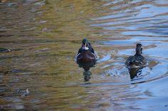 Fitness Trail, Duck Pond, Garden Planters, Wildlife, Wings, Bird, Nature, Animals, Playground Slide